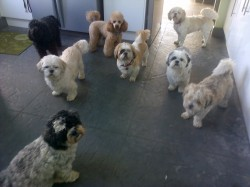 Some of our doggy guests